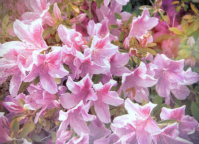 Photograph - Azalea Festival II by Phil Mancuso
