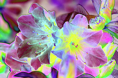 Photograph - Azalea Foil by Robyn Stacey
