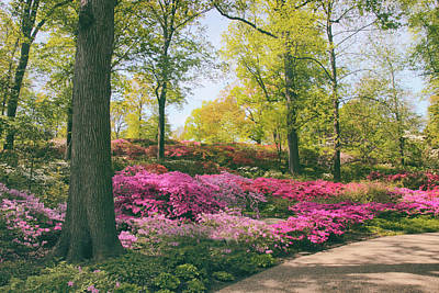 Photograph - Azalea Garden Delight by Jessica Jenney