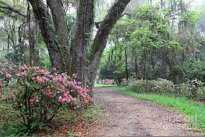Photograph - Azalea Garden Path by Carol Groenen