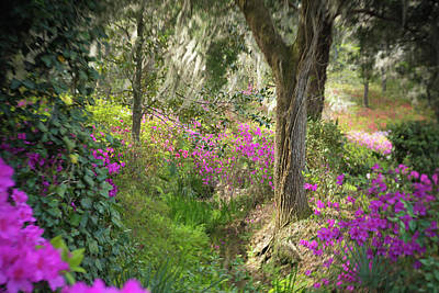 Photograph - Azalea Hill Breezes by Kim Carpentier