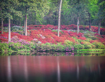 Photograph - Azalea Hill by Kim Carpentier