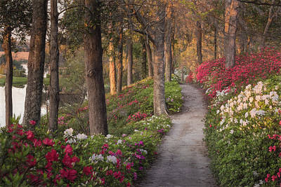 Azalea Hill Path Art Print