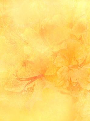 Azalea Impressions Art Print by Catherine Alfidi