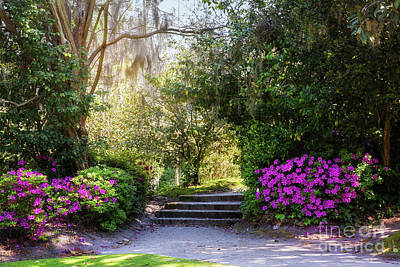 Photograph - Azalea Path At Middleton by Sharon McConnell
