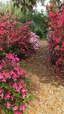 Photograph - Azalea Path Bok Tower Gardens by Judy Wanamaker