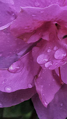 Photograph - Azalea Rain Drops 2 by E Karl Braun