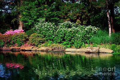 Photograph - Azalea Reflection At Honor Heights Park by Tamyra Ayles