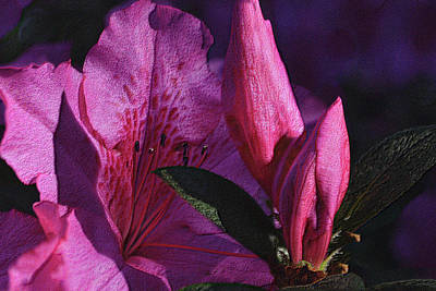 Photograph - Azalea - Two Stages by Nadalyn Larsen
