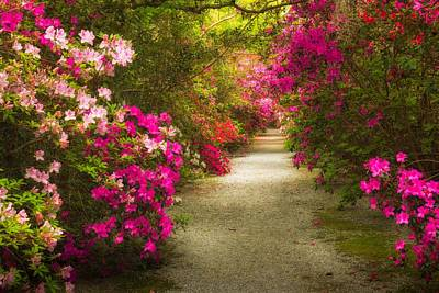 Photograph - Azalea Walk by Kim Carpentier