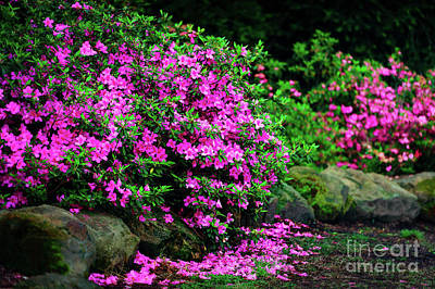 Photograph - Azalea Waterfall At The Azalea Festival by Tamyra Ayles