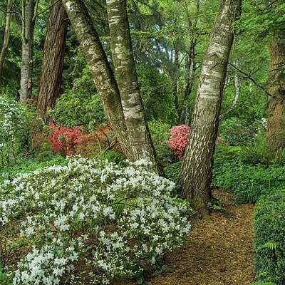 Photograph - Azalea Woodland by Adam Gibbs