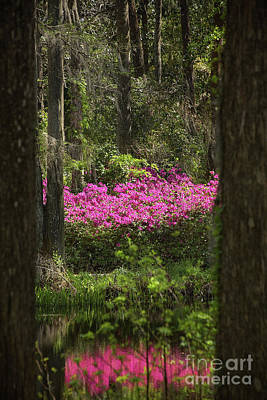 Photograph - Azaleas Across The Pond by Sharon McConnell