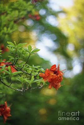 Photograph - Azaleas Garden Of Eden by Mike Reid