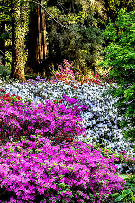 Digital Art - Azaleas Of The Forest by John Haldane