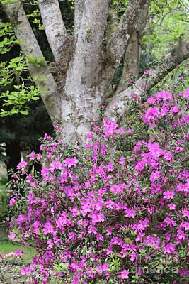 Photograph - Azaleas With Tree by Carol Groenen