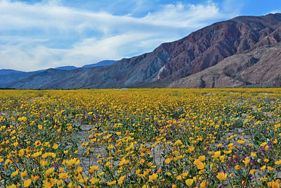 Photograph - Azna Borrego Desert Sunflowers by Kyle Hanson