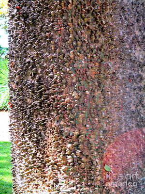 Photograph - Azores Tree Bark by Randall Weidner