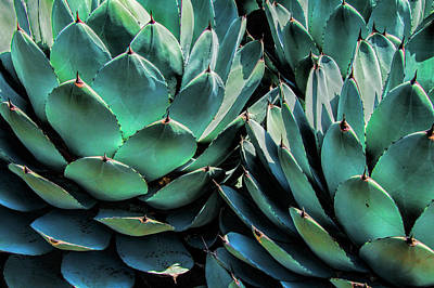 Photograph - Azul Agave In California by Randall Nyhof
