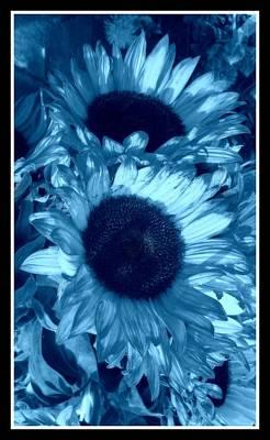 Photograph - Azure Blue Sunflowers by Mr Photojimsf