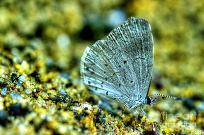 Photograph - Azure On The Sand by Michael Eingle
