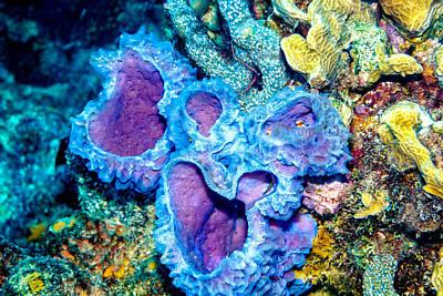 Photograph - Azure Vase Sponges by Perla Copernik