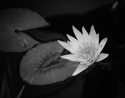 Photograph - B And W Waterlily  by Michael Raiman
