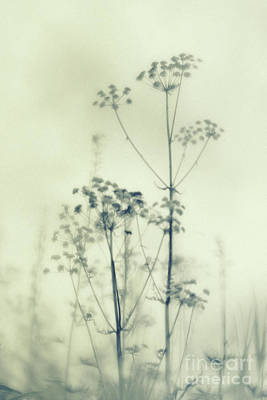 Abstraction Photograph - Wild Flowers 3 by Priska Wettstein