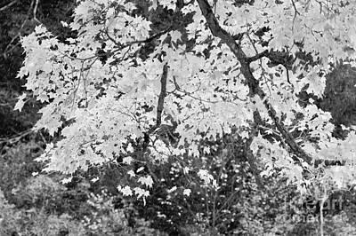 Fleetwood Mac - B/W Autumn by Jeffery L Bowers
