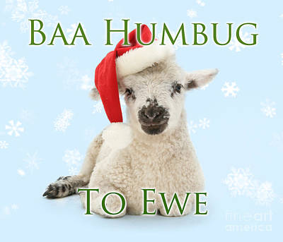 Photograph - Baa Humbug To Ewe by Warren Photographic