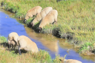 Photograph - Baaaaack To The Watering Hole by Donna Kennedy