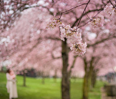 Photograph - Babies And Blossoms by Kunal Mehra