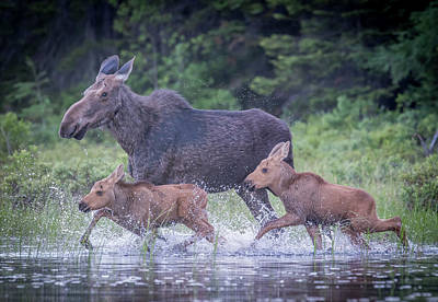 Photograph - Babies In Tow by Ian Sempowski