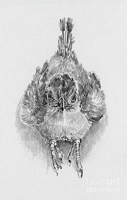 Roadrunner Drawing - Babies Of The Bosque Baby Roadrunner by Pat Oldham