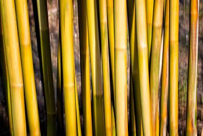 Bamboo Abstract II Art Print