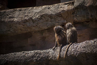 Photograph - Baboon Brothers by Stewart Scott