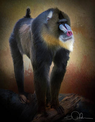 Digital Art - Baboon by Gloria Anderson