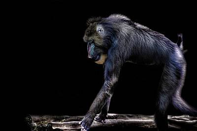 Baboon Photograph - Baboon by Martin Newman