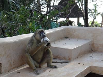 Exploramum Photograph - Baboon With A Sweet Tooth by Exploramum Exploramum