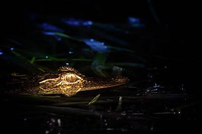 Baby Alligator At Night Art Print
