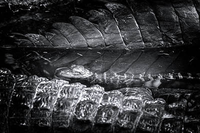 Reptiles Photograph - Baby Alligator Playpen by Mark Andrew Thomas