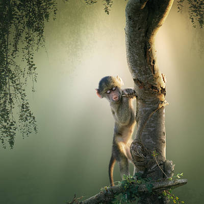 Baby Baboon In Tree Print by Johan Swanepoel