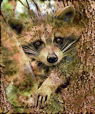 Raccoon Mixed Media - Baby Bandit by Dave Lee