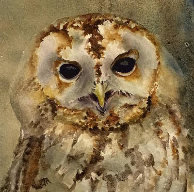 Painting - Baby Barred Owl by June Rollins