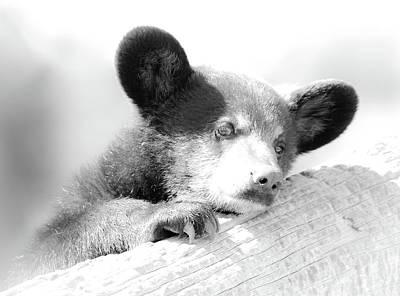Photograph - Baby Bear Cub Bw by Athena Mckinzie