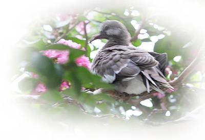 Baby Bird In Crape Myrtle Tree Art Print by Linda Phelps