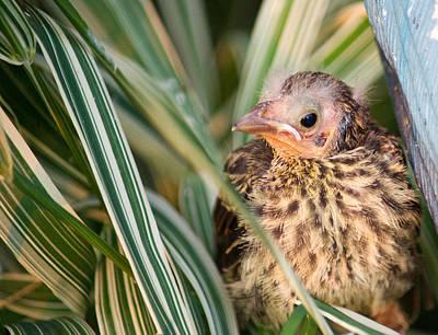 Baby Bird Peering Out Art Print by Douglas Barnett