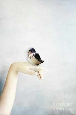 Photograph - Baby Bird by Stephanie Frey