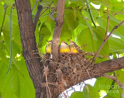 Baby Birds Waiting For Mom Art Print