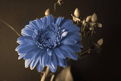 Baby Blue Gerbera Print by Nancy TeWinkel Lauren